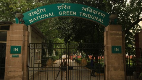 NGT pulls up Delhi authorities for going soft on illegal dairies