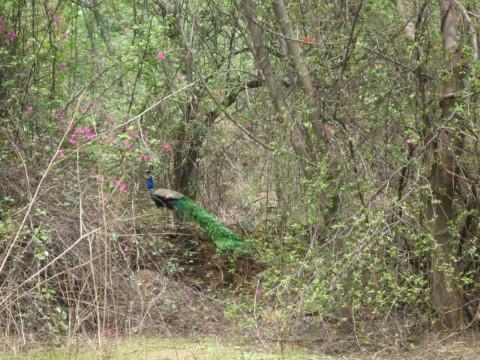 Delhi to get 7th biodiversity park soon