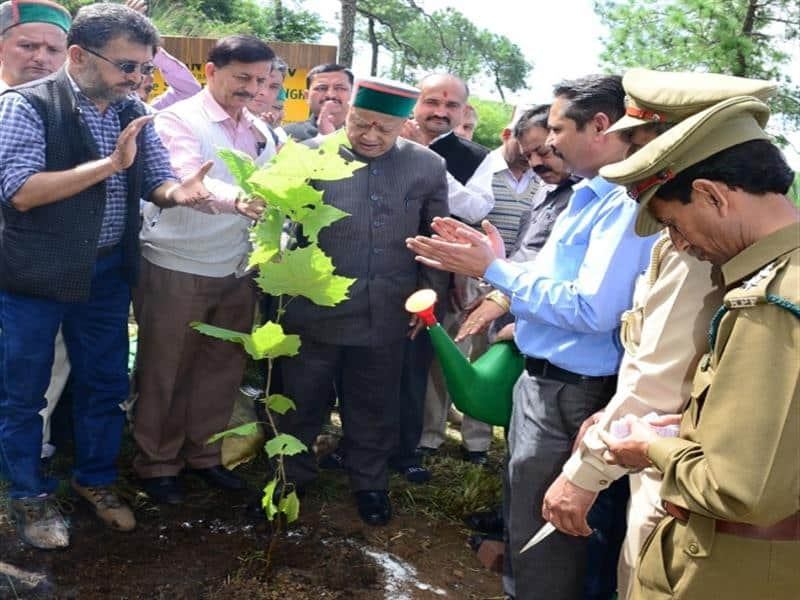 HP plants over 25 lakh saplings in a five-day drive