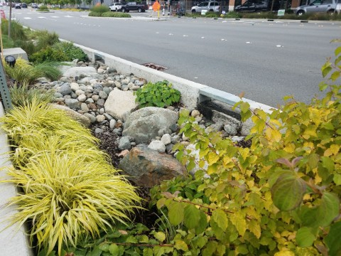 Rain gardens to come up along city roads in Vijayawada