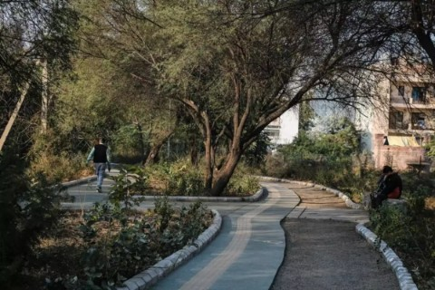 Haryana to build a city forest in Gurugram