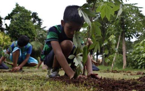 Plantation drive in Solan saw children plant 1,500 saplings