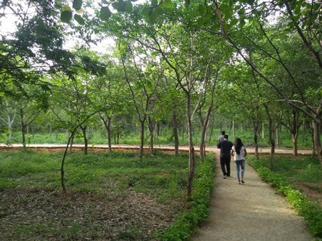 Two new urban forest parks come up at Hyderabad