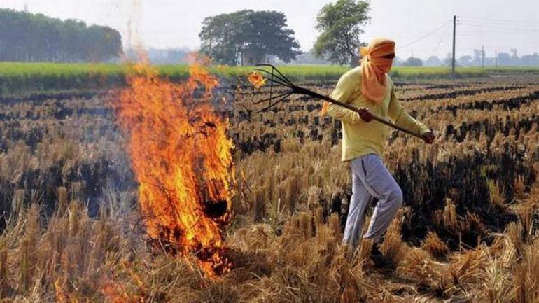 EPCA directs 4 states to curb open waste, stubble burning practices