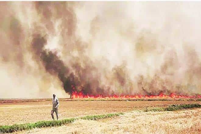 Punjab witnesses 3,105 cases of stubble burning in single day