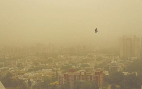 Delhi's AQI dips down to 'season's worst' post Dussehra