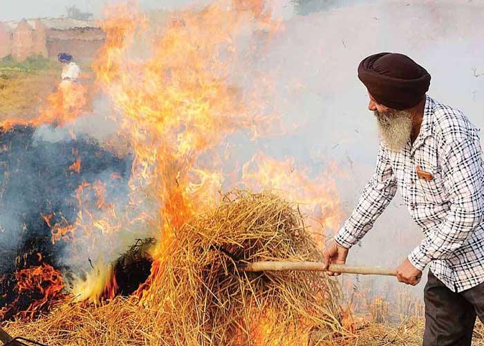 Punjab to depute 8,000 nodal officers to keep stubble burning in check