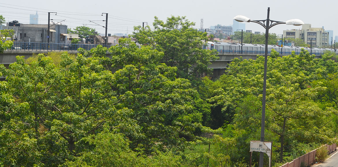 Capital's green cover increases by 19sqkm in last 2 years
