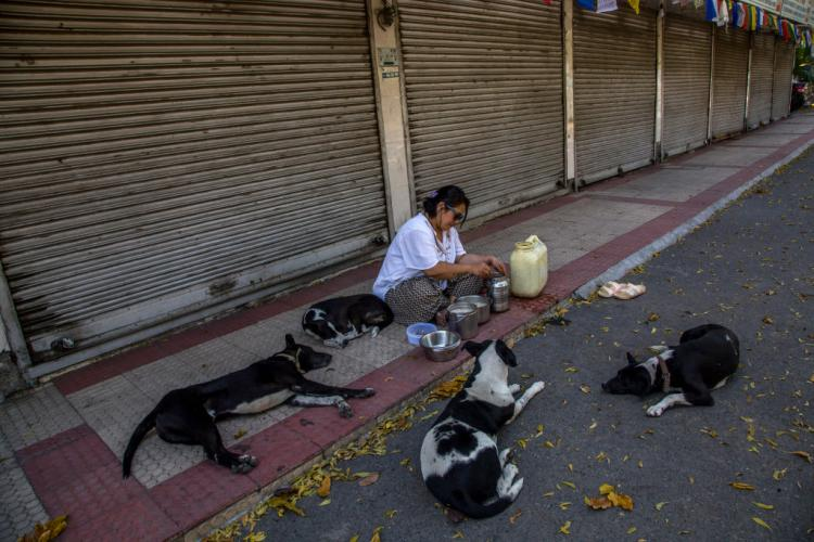 Odisha government sanctioned Rs 54 lakhs to feed stray animals amid lockdown