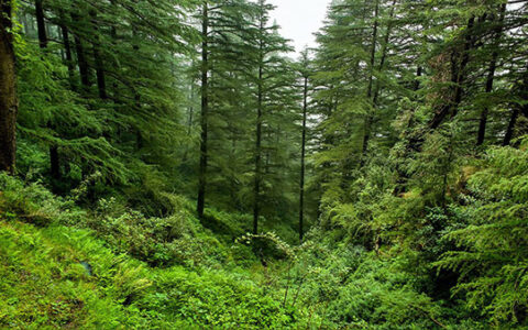 NGT identifies 46.11 sq km as private forest in Goa