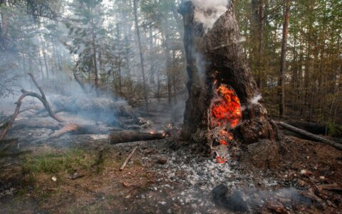Fires raging across Arctic, emitted large amounts of CO2