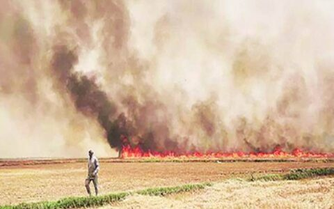 'Pusa decomposer' to deal with smog of stubble burning