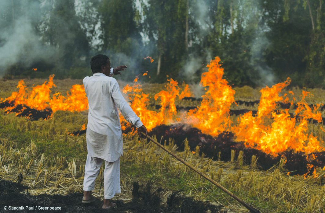 DPCC fines 10 people for Rs 10,000 for practicing stubble burning
