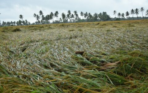 67,864 hectares of crops destroyed in Andhra due to floods