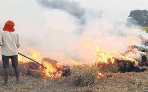 49% increase in stubble burning incidents in Punjab