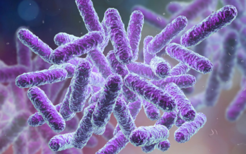 Six cases of Shigella infection in Kerala