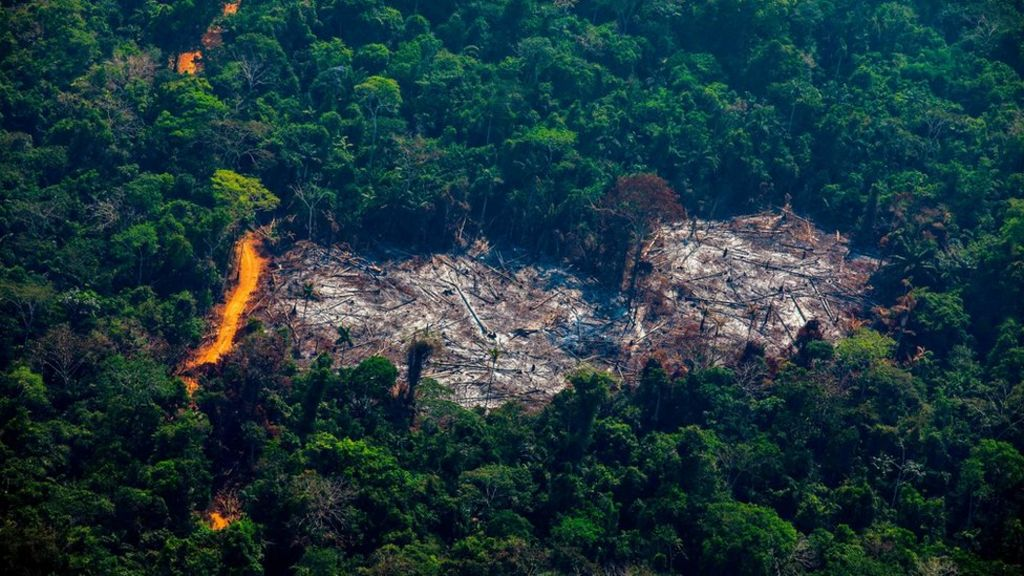 Amazon experienced major surge in deforestation in 2020: Analysis