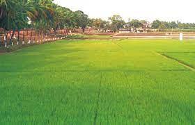 Punjab soil and conservation dept nabs top NABARD award