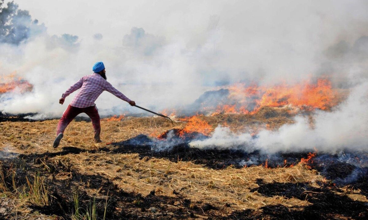 44.5% increase in stubble burning incidents in Punjab: Centre tells SC44.5% increase in stubble burning incidents in Punjab: Centre tells SC
